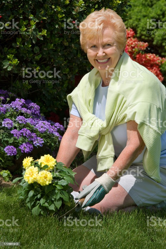 active senior gardening royalty-free stock photo