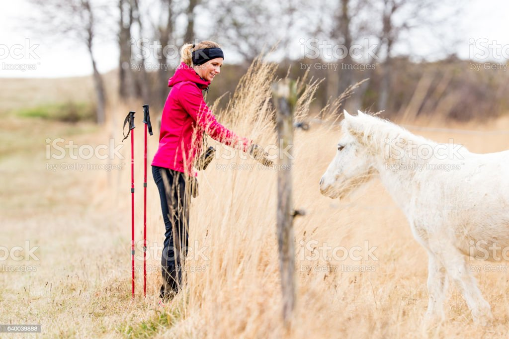 Active Young Woman Fascinate By The Horses On The Plateau stock photo