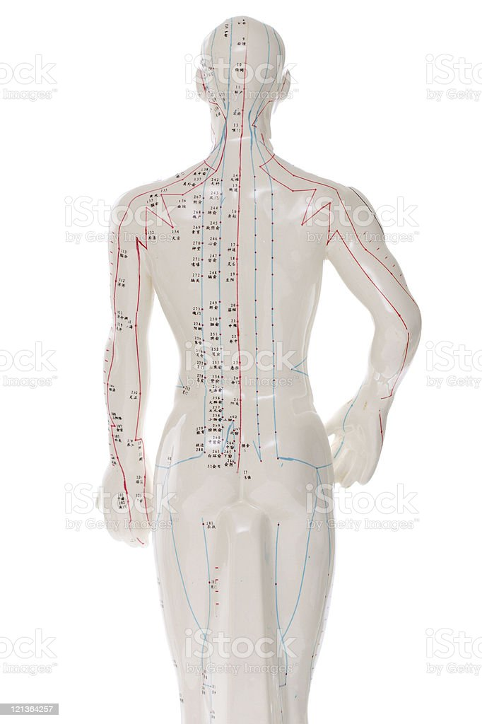 Acupuncture figure over white - Back View stock photo