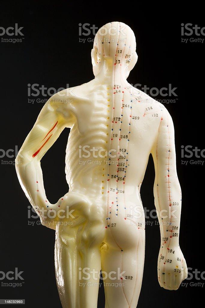 Acupuncture mannequin stock photo