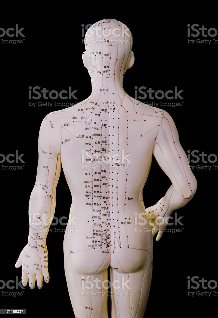 Acupuncture Model - Male Human Back Body royalty-free stock photo