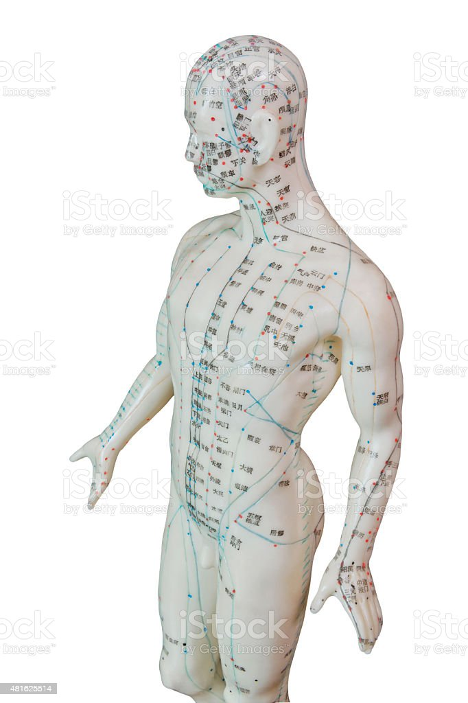 Acupuncture Model - Male Human Frontal Body stock photo