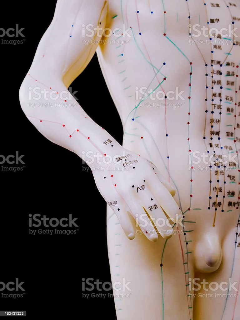 Acupuncture Model - Male Human Torso stock photo