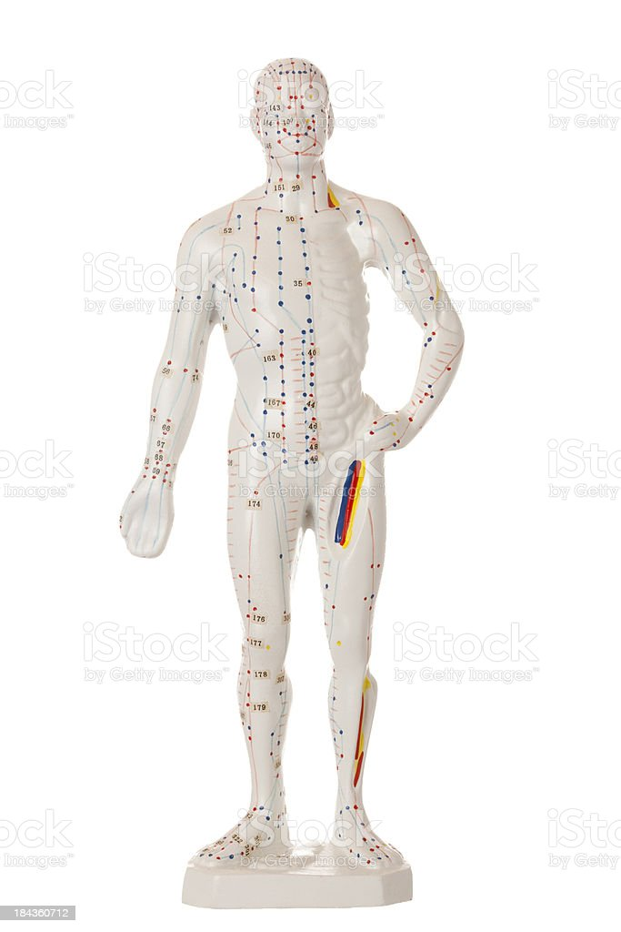 Acupuncture model royalty-free stock photo