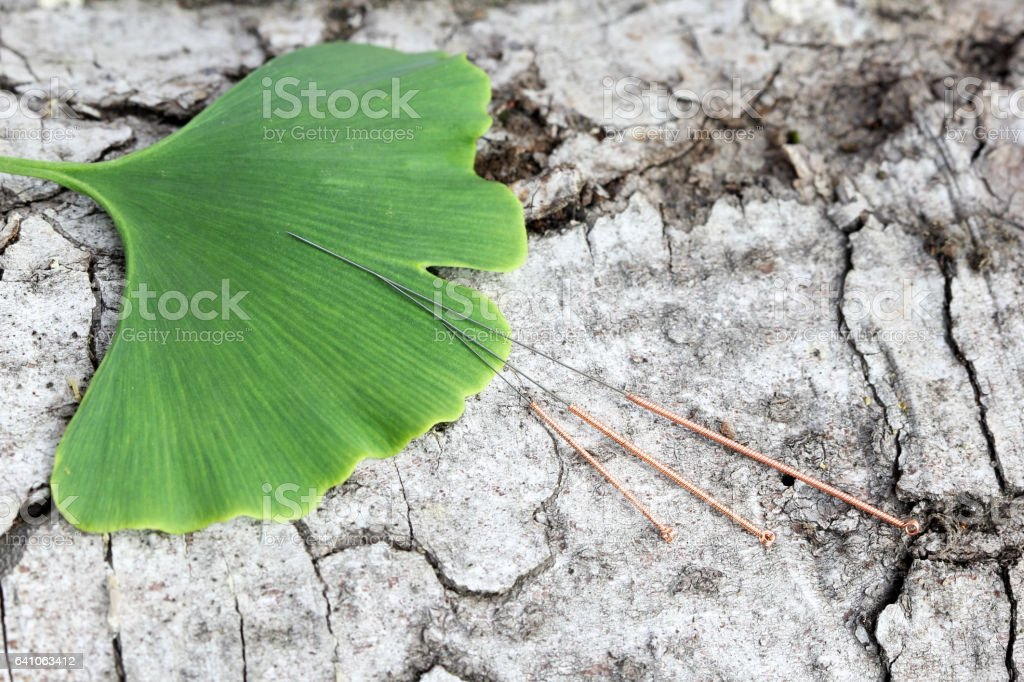 Acupuncture needlesand and ginkgo leaf stock photo
