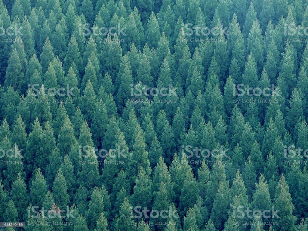 a,cypress stock photo