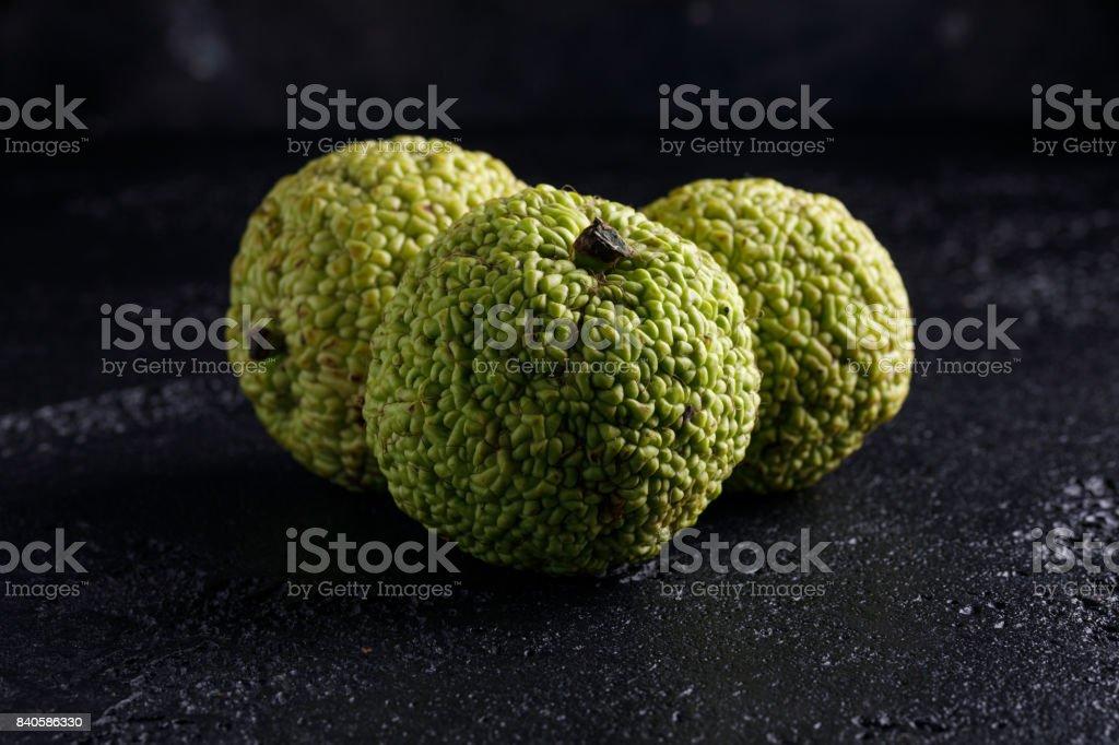Adam's apple on a black background. maclura stock photo