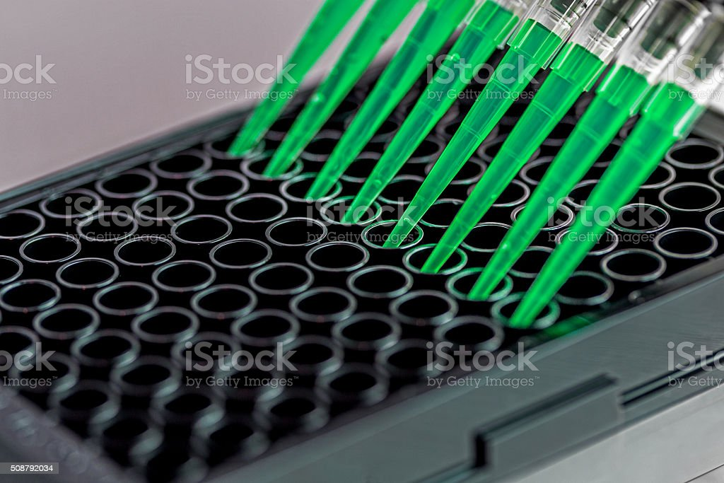 Adding samples to a black 96 well plate stock photo
