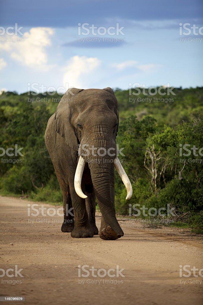 Addo Elephant National Park stock photo