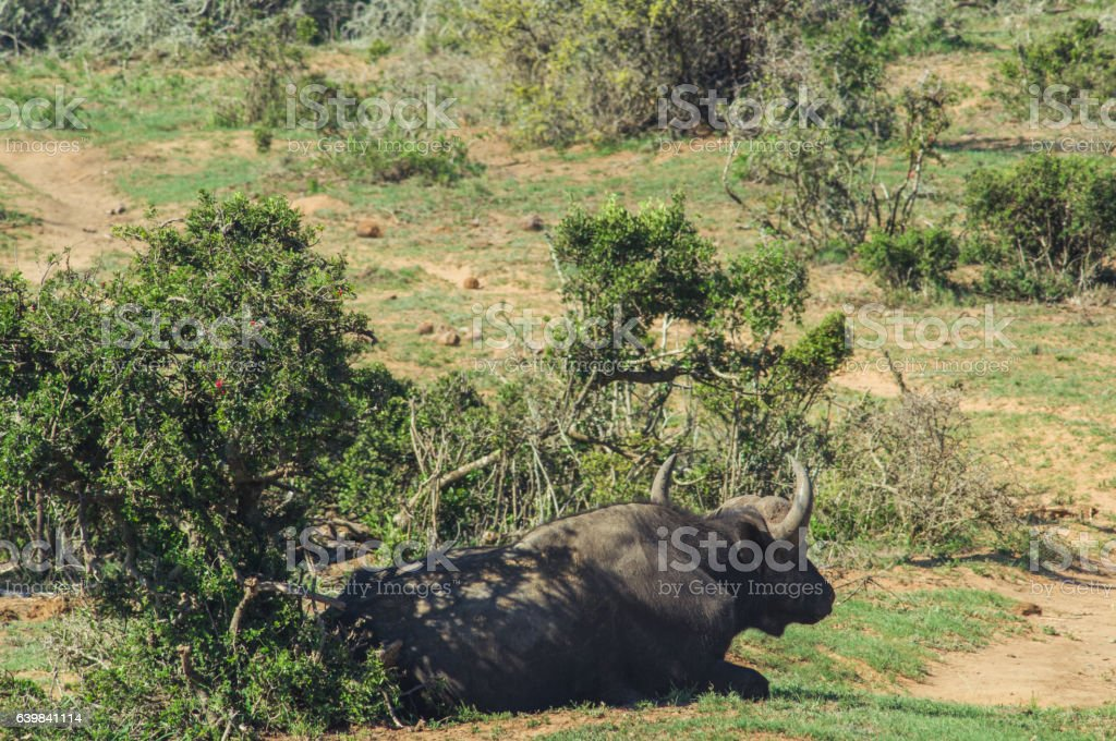 Addo elephant national park,eastern cape,South africa stock photo