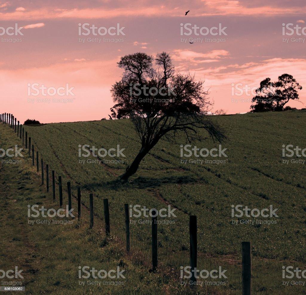 Adelaide Hills stock photo