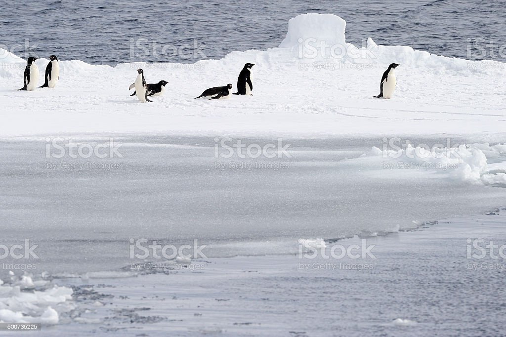 Adelie Penguins and Ice. stock photo