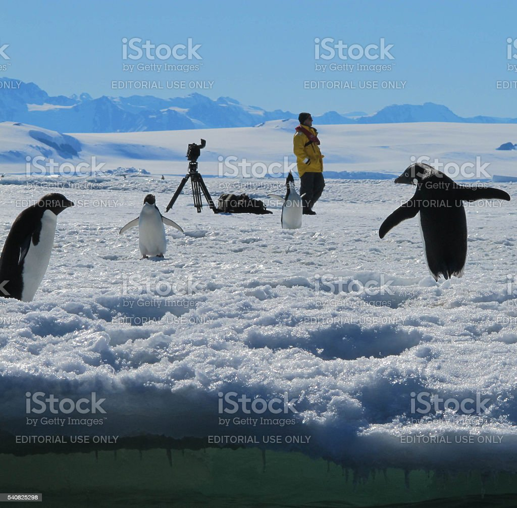 Adelie Penguins and Photographer stock photo