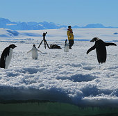 Adelie Penguins and Photographer