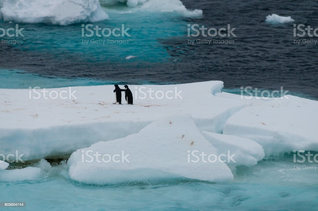 Adelie Penguins on an ice shelf in the Weddell Sea stock photo