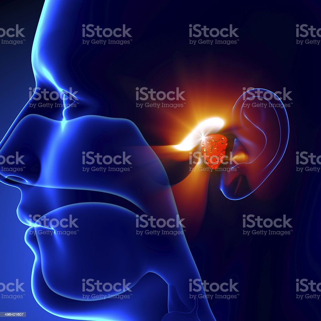 Adenoids - Ear stock photo