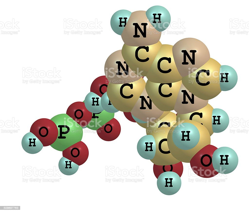 Adenosine triphosphate (ATP) molecule isolated on white stock photo