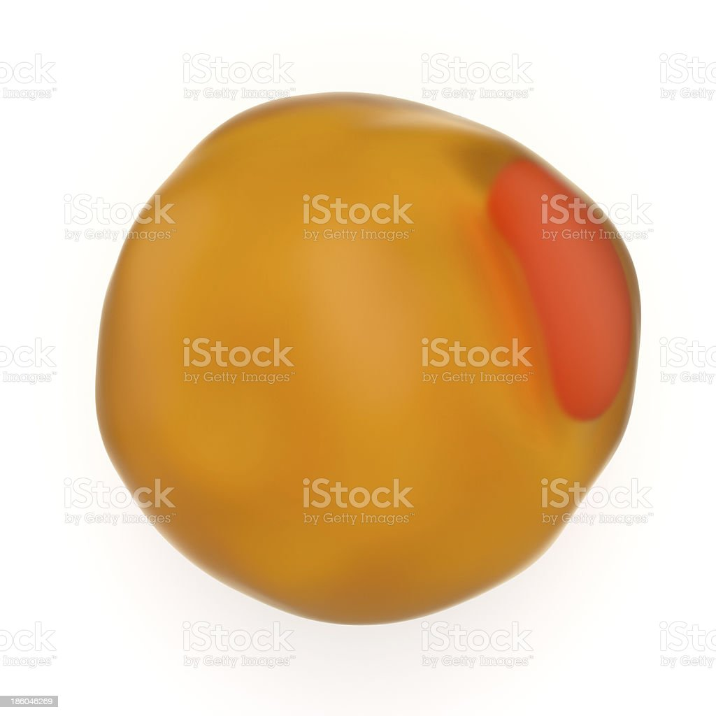 Adipocyte or lipidocyte fat cell stock photo