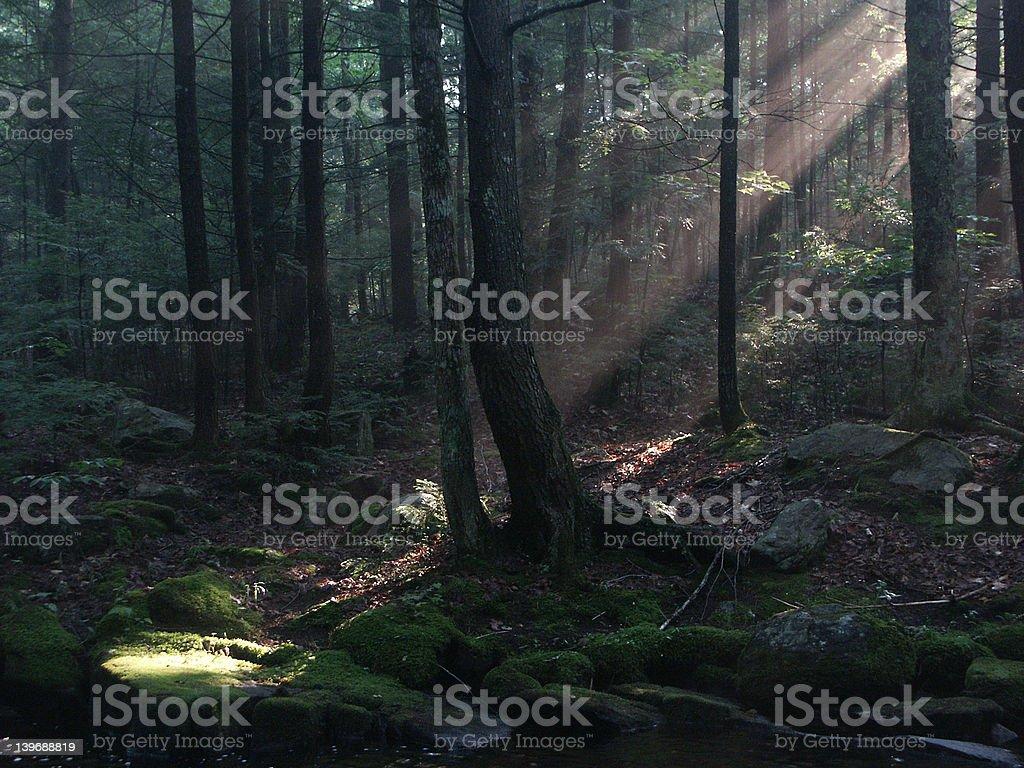 Adirondack Forest stock photo
