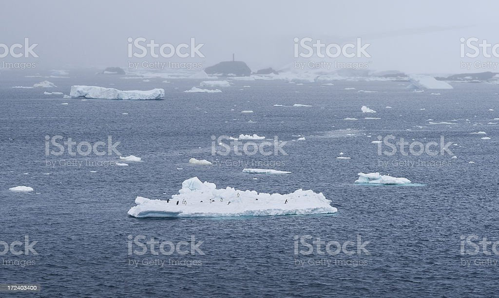 Ad?lie Penguins on Floating Iceberg in Antarctica royalty-free stock photo