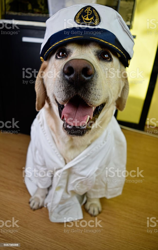 Admiral Dog stock photo