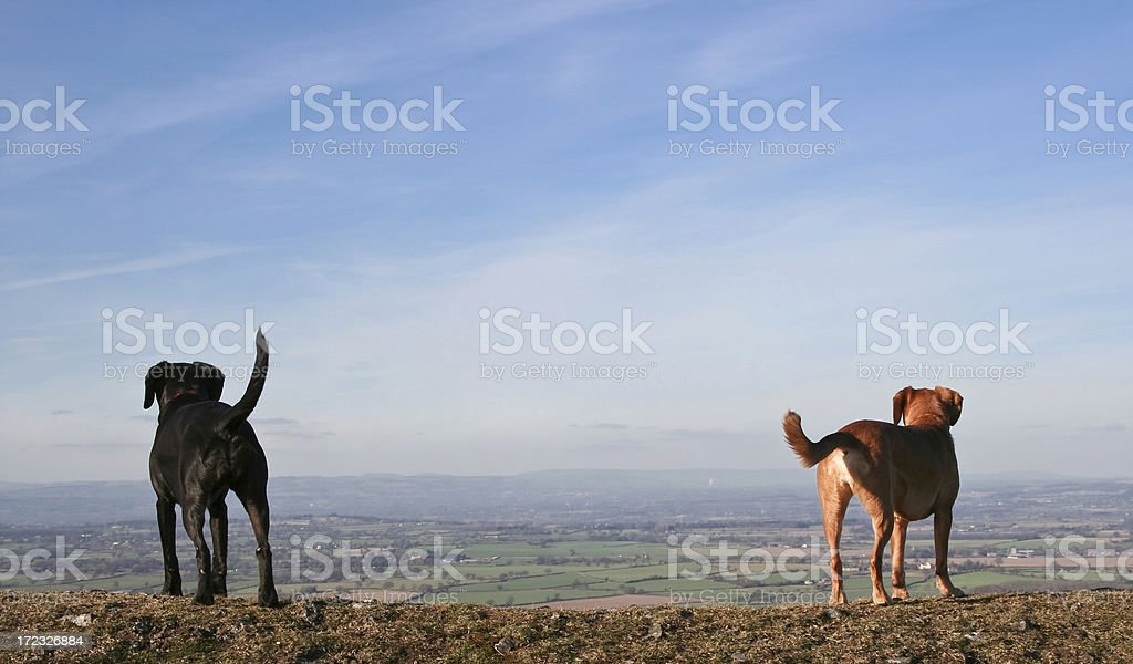 admiring the view stock photo