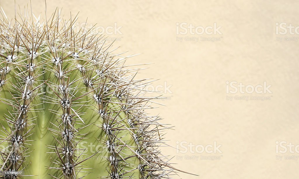 Adobe Wall with Cactus stock photo