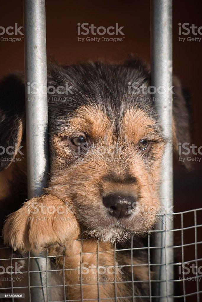 Adopt me please!! royalty-free stock photo