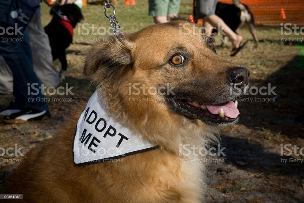 Adoptable Mixed Breed Dog Looking For Home royalty-free stock photo