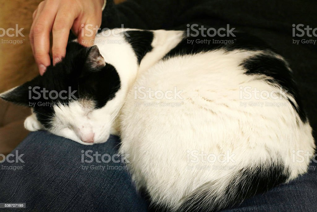 Adopted cat stock photo