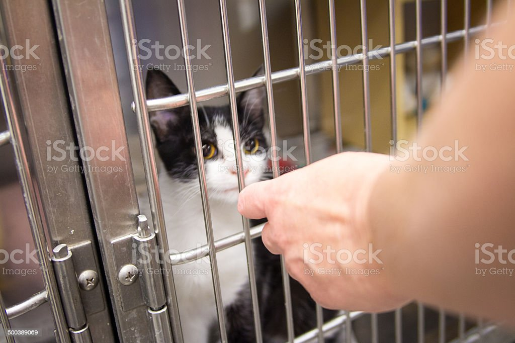 Adopting or Purchasing a Baby Kitten from Amimal Shelter stock photo