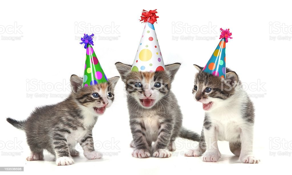 Adorable Birthday Singing Cats royalty-free stock photo
