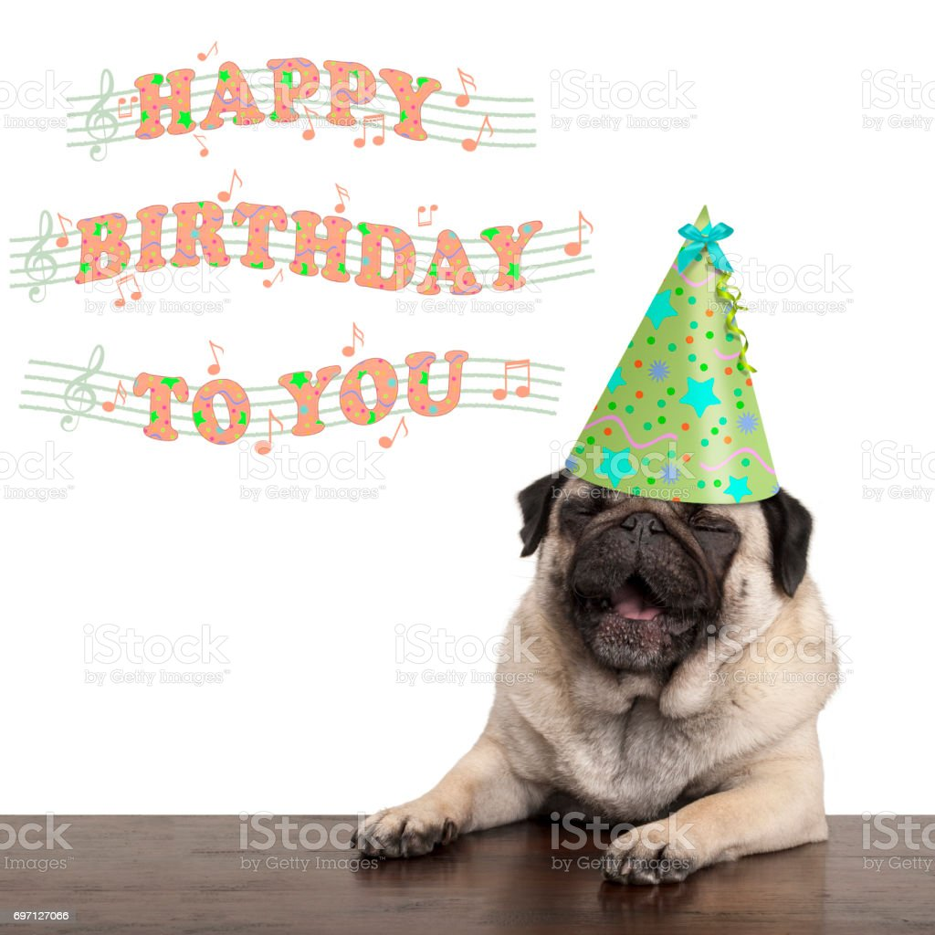 adorable cute pug puppy dog singing happy birthday to you, isolated...