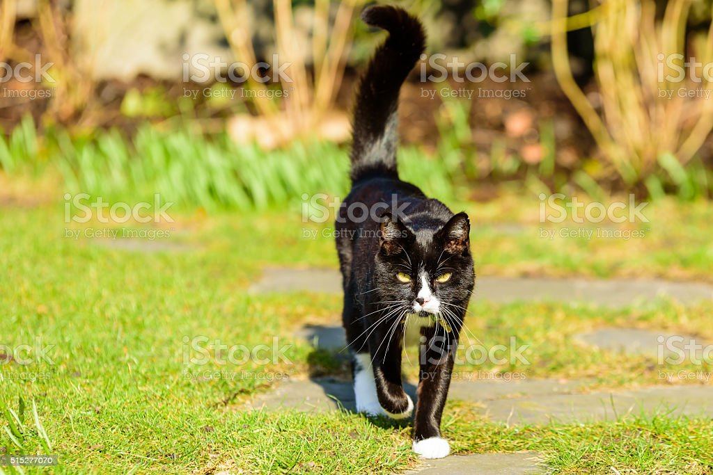 Adorable housecat stock photo
