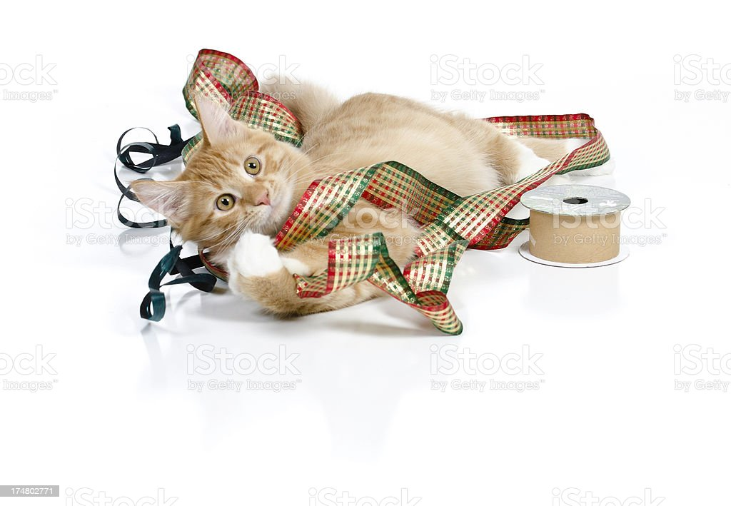 Adorable Kitten Plays with Ribbon stock photo