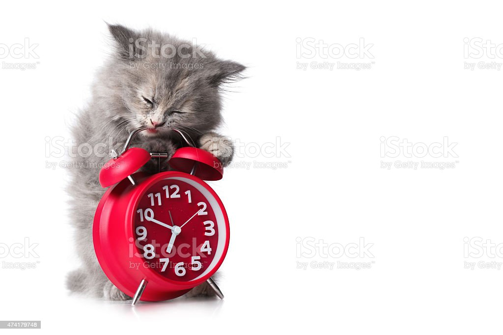 Adorable kitten with red alarm-clock isolated copyspace stock photo