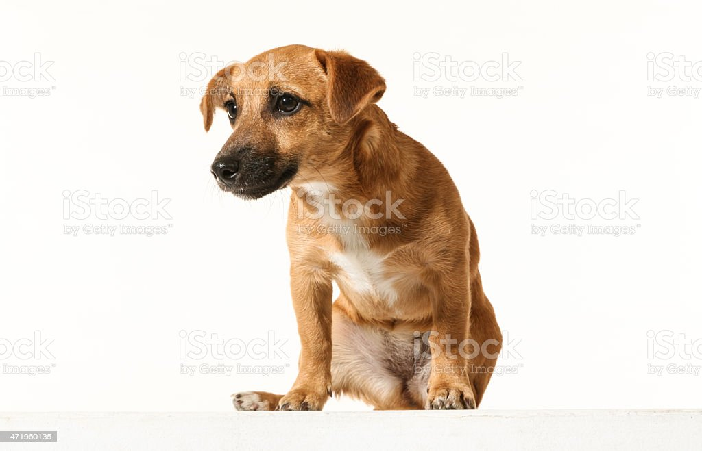Adorable little dog stock photo