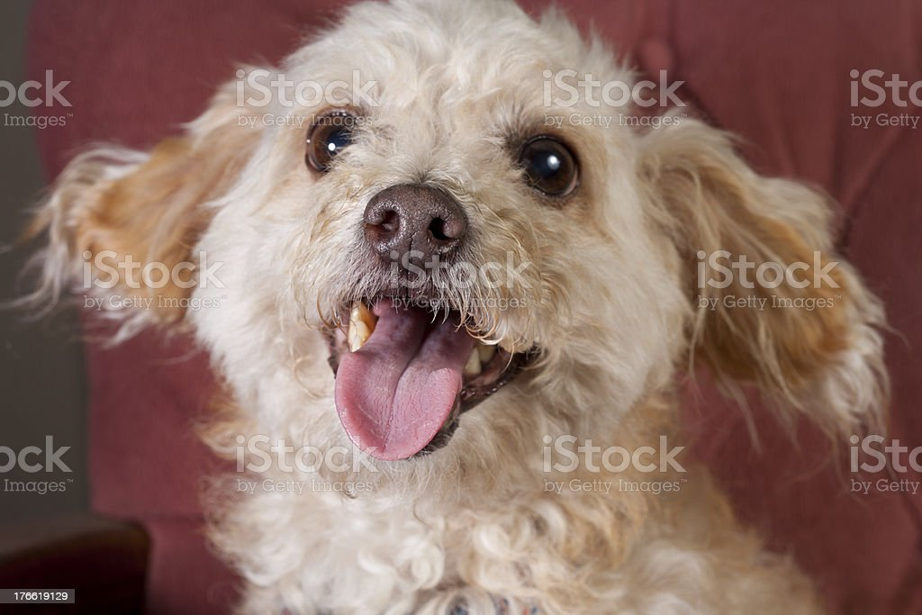 Adorable Pet royalty-free stock photo