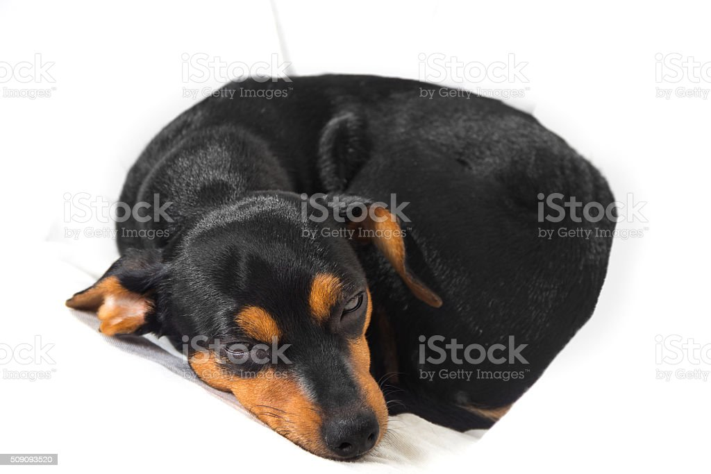 Adorable puppy on white background stock photo
