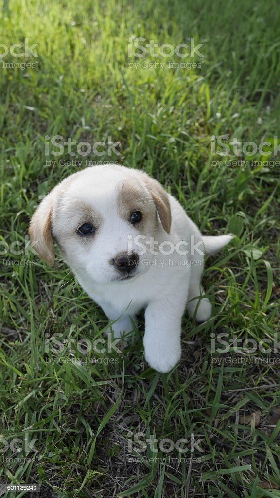 adorable puppy stock photo