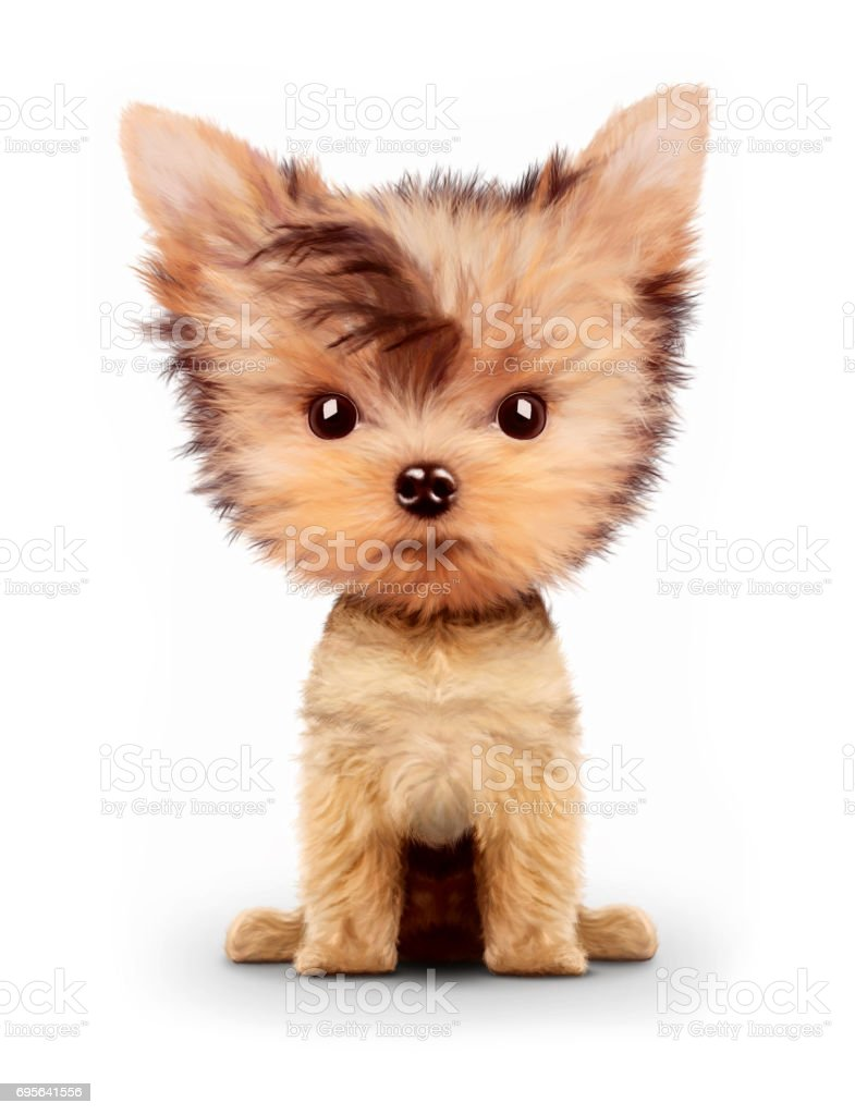 Yorkie Puppy Drawings Pictures Images And Stock Photos Istock