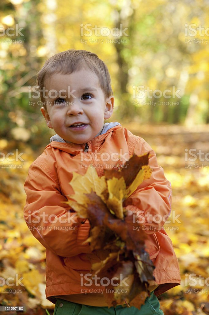 Adorable toddler boy with maple leaves at sunny autumn day royalty-free stock photo