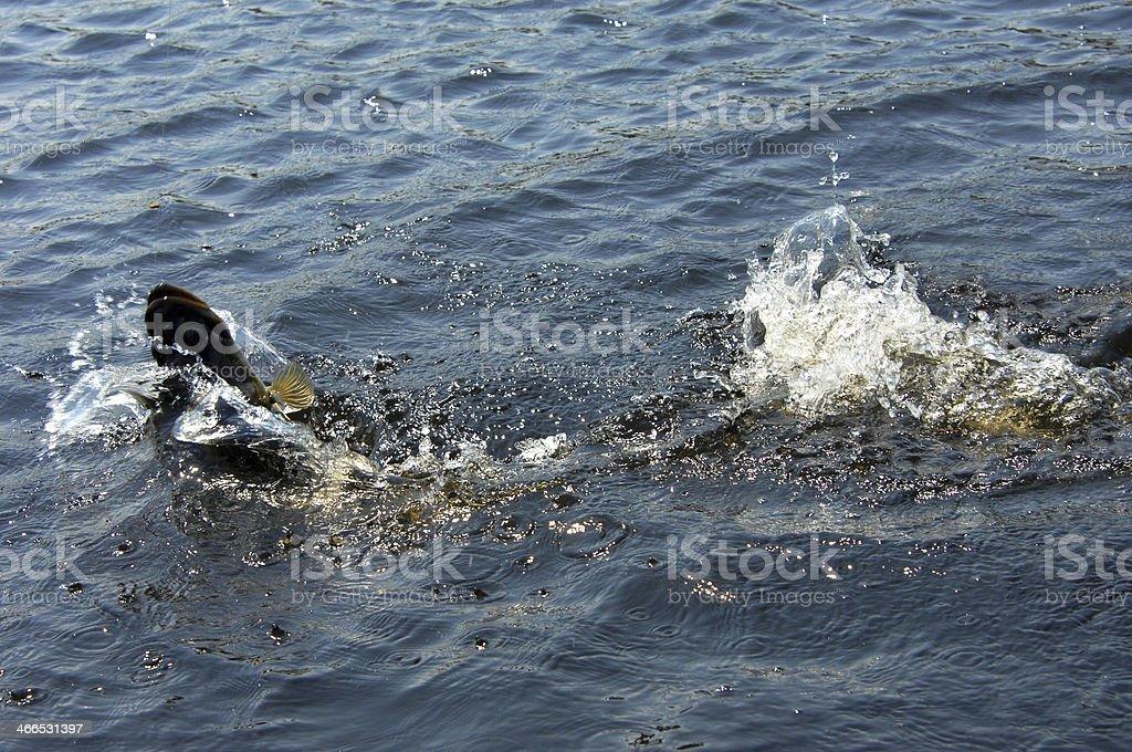 Adrenalin Rush stock photo