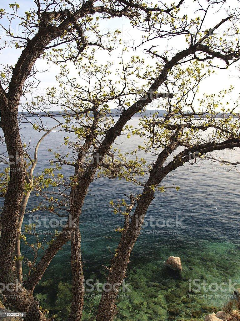 Adriatic coast detail stock photo
