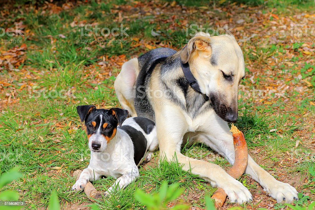 Adult and puppy dog playing stock photo