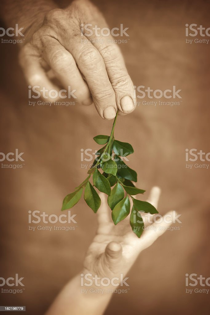 Adult gives Child a Leaf stock photo