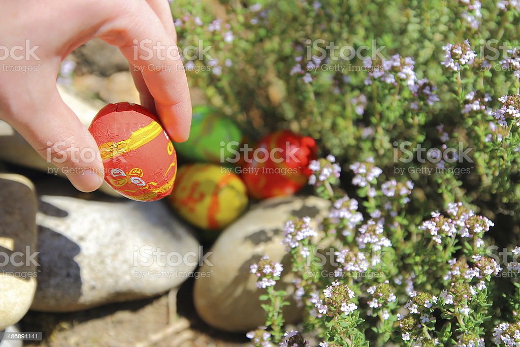 Adult is hiding Easter eggs royalty-free stock photo