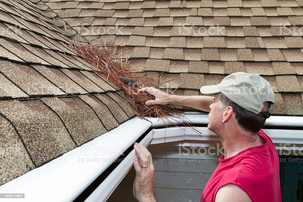 Adult male cleans pine straw from a roof vally. stock photo