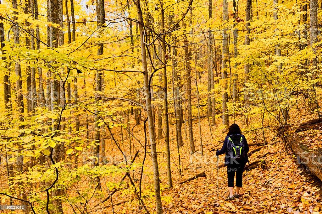 XXXL: Adult woman hiking through an autumn forest stock photo