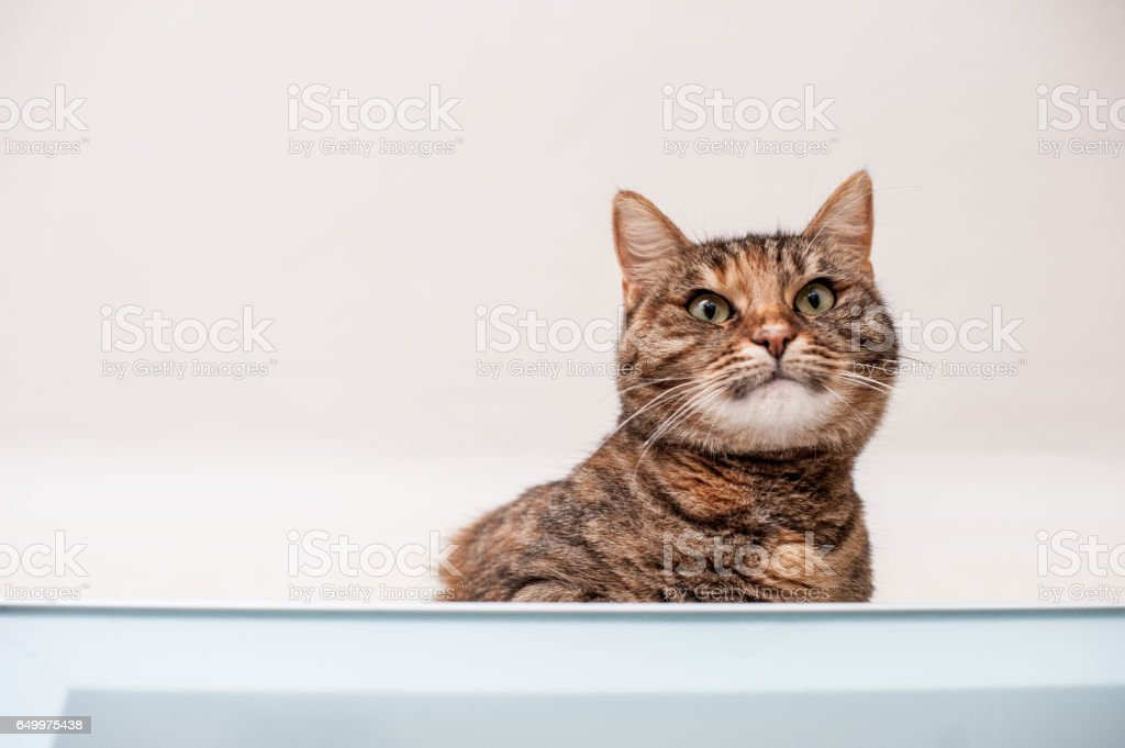 Adult Woman Playing With Cat While Cleaning The Kitchen stock photo